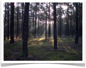 Wald - Ein Ort für alle Sinne